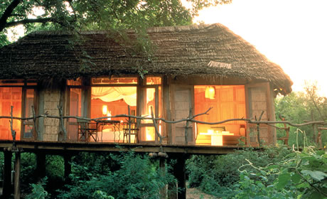 Lake Manyara Tree Lodge